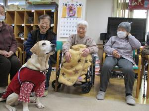 『dog』の画像
