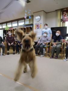 『dog4』の画像